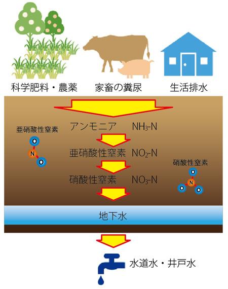 硝酸性窒素が水道水に混入するフロー図